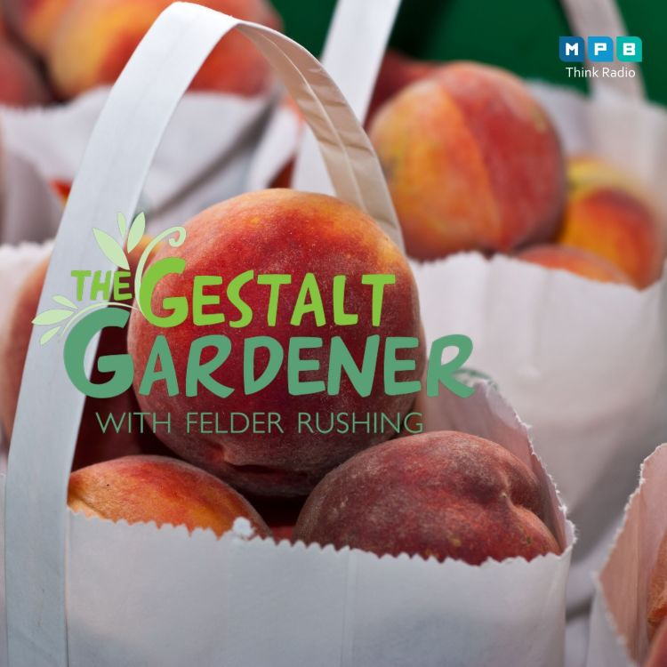 cover art for The Gestalt Gardener:  These Peaches