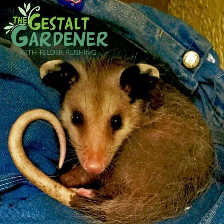cover art for The Gestalt Gardener | Bye Bye Pogo