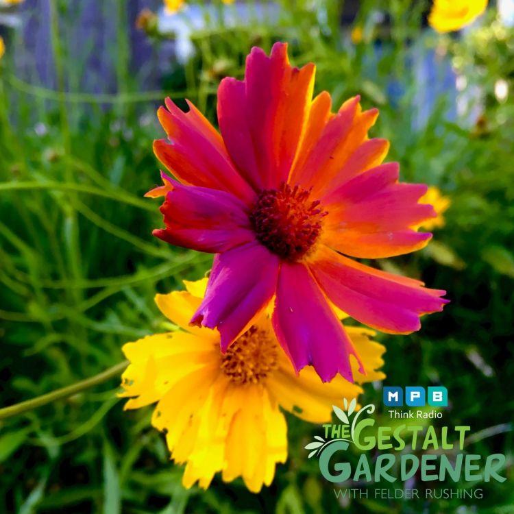 cover art for The Gestalt Gardener | Just A Little Paint
