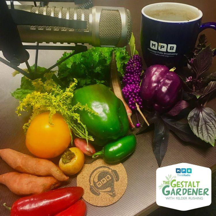 cover art for The Gestalt Gardener | Rainbow Garden