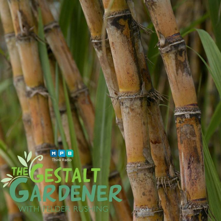 cover art for The Gestalt Gardener | Sweet Life