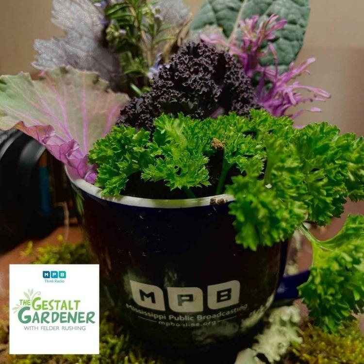 cover art for The Gestalt Gardener | February Freeze