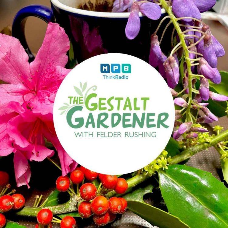 cover art for The Gestalt Gardener | Blackberry Winter