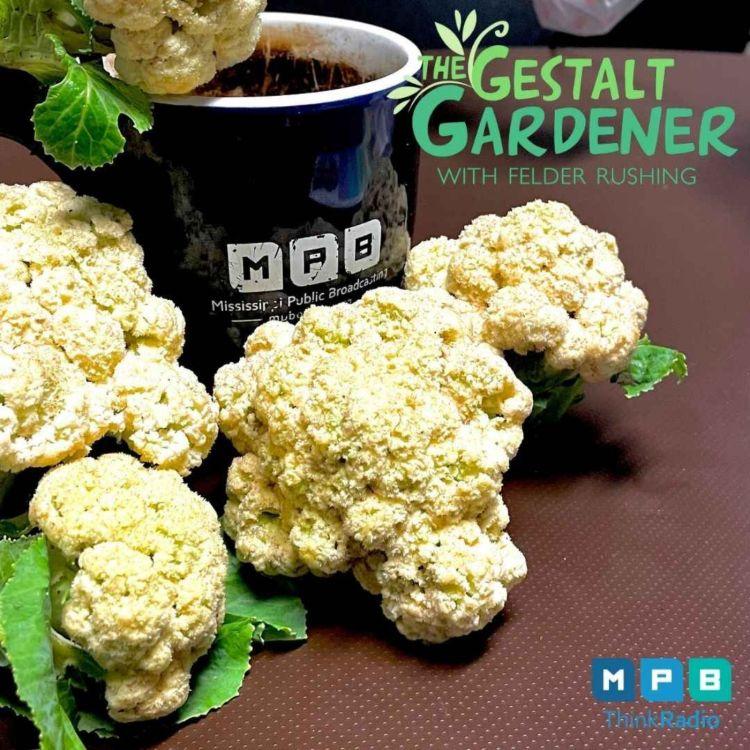cover art for The Gestalt Gardener | I've Been Everywhere