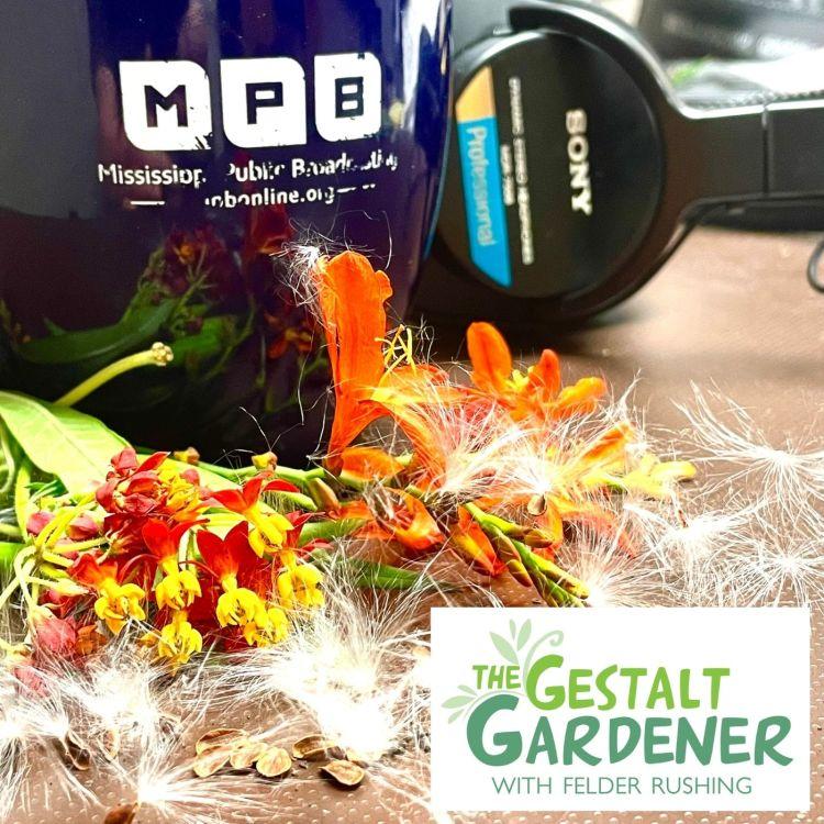 cover art for The Gestalt Gardener | Smug Mug