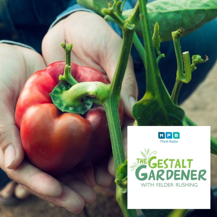 cover art for The Gestalt Gardener   2nd Summer Garden