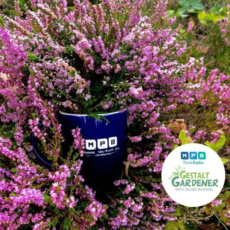 cover art for The Gestalt Gardener | Touchdown