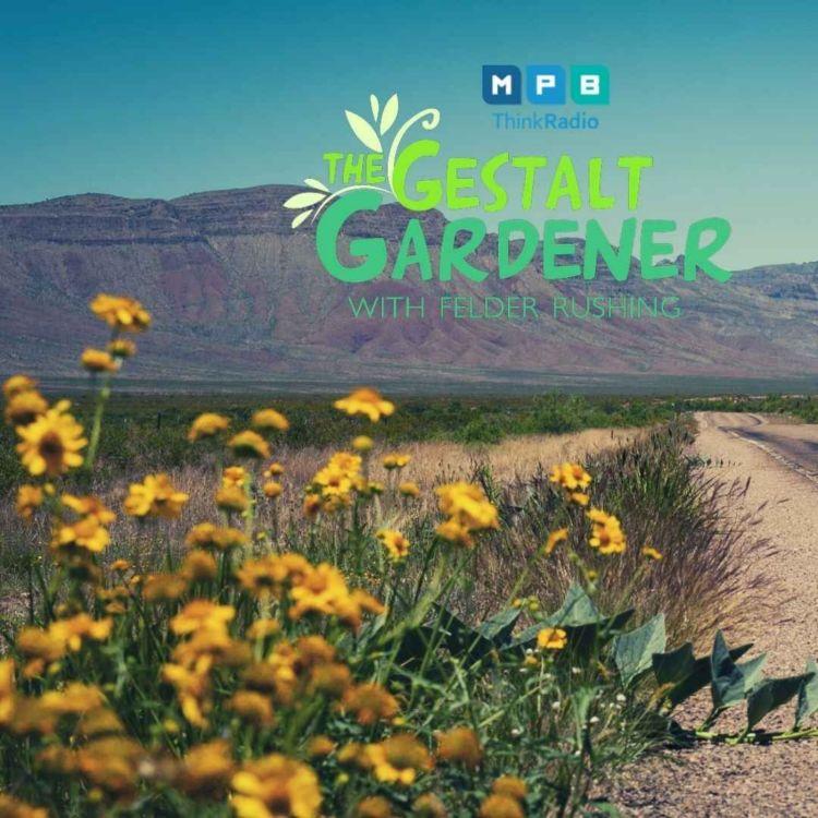 cover art for The Gestalt Gardener | West Texas Trip