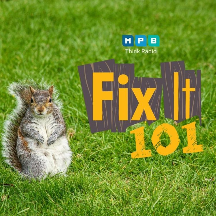 cover art for Fix It 101: Feeling Squirrely