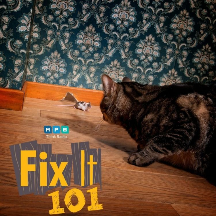cover art for Fix It 101: House Pest