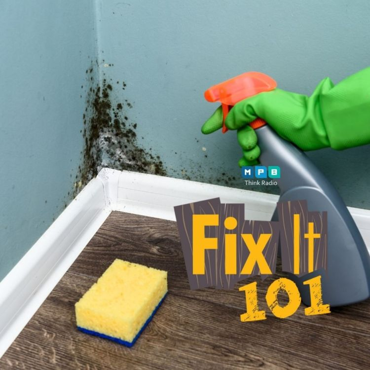 cover art for Fix It 101: Really Clean