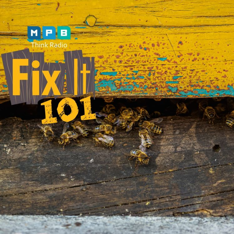 cover art for Fix It 101: No Bees In The House