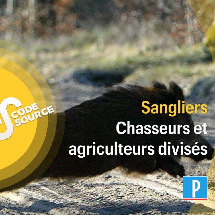 cover art for Prolifération des sangliers  : chasseurs et agriculteurs divisés