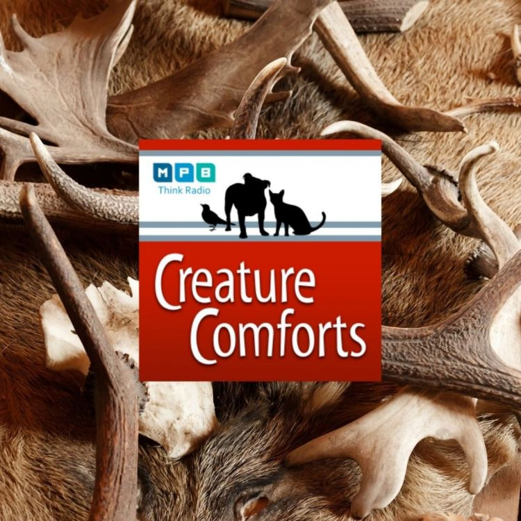 cover art for Creature Comforts: Hunter Education