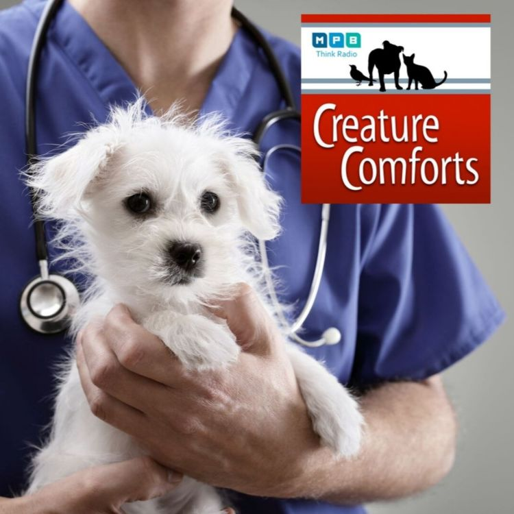 cover art for Creature Comforts: The Pet Hospital Is Open