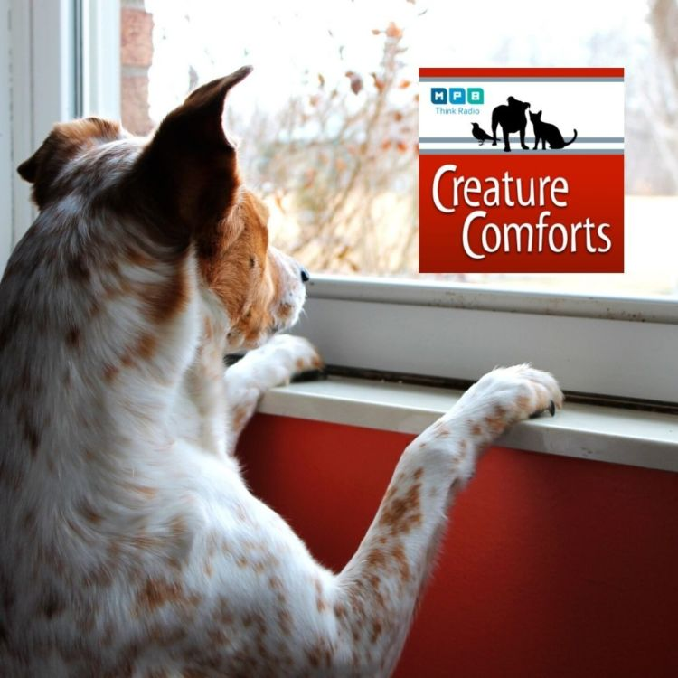 cover art for Creature Comforts: Outside the Window