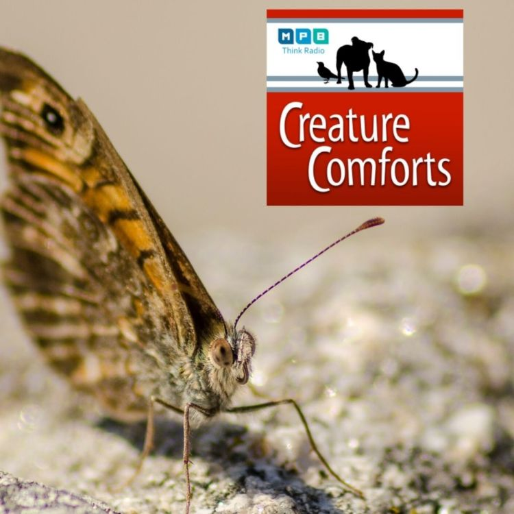 cover art for Creature Comforts: Mighty Moth and other Bugs