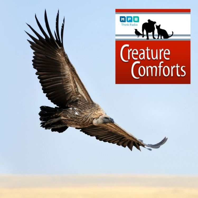cover art for Creature Comforts: Too Close