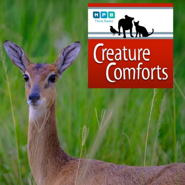 cover art for Creature Comforts: Deer Talk
