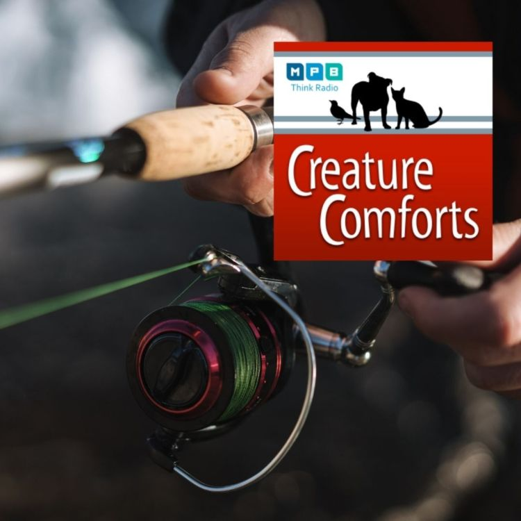 cover art for Creature Comforts: Rod & Reel