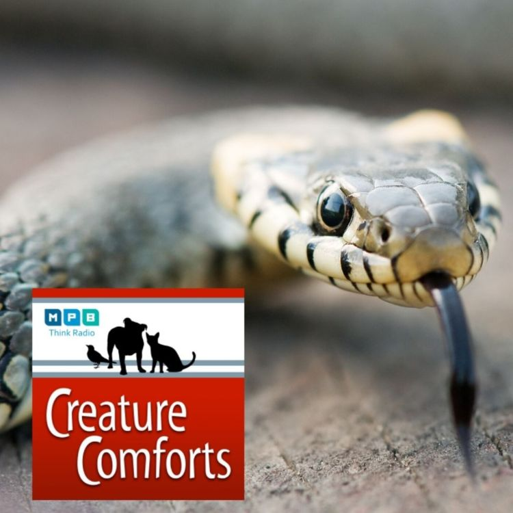 cover art for Creature Comforts: Terry and the Snakes