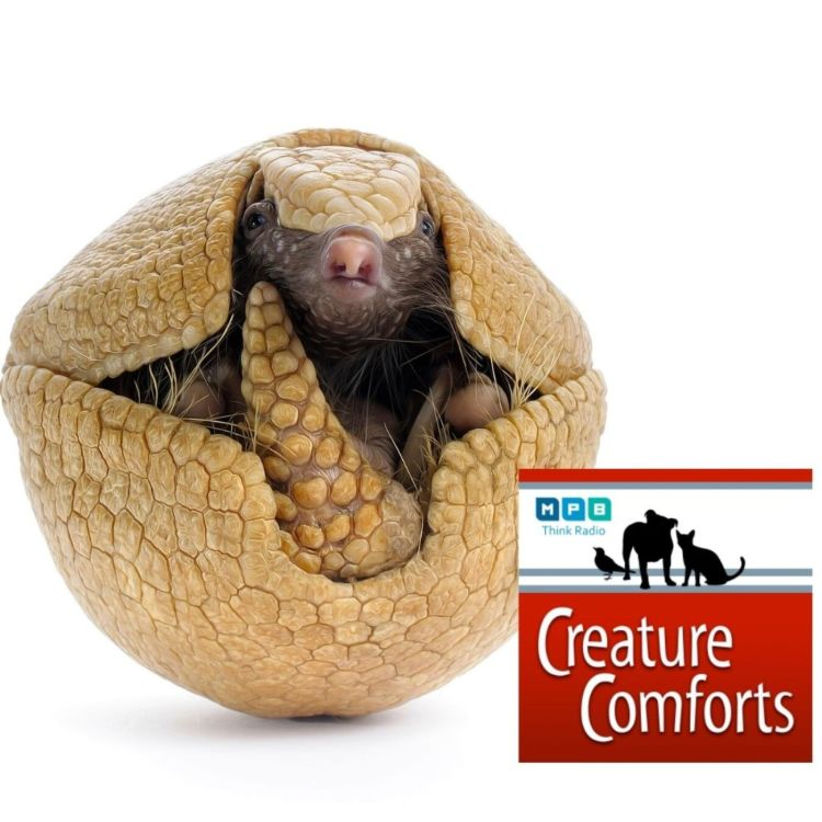 cover art for Creature Comforts: Why Did the Armadillo Cross the Mississippi?