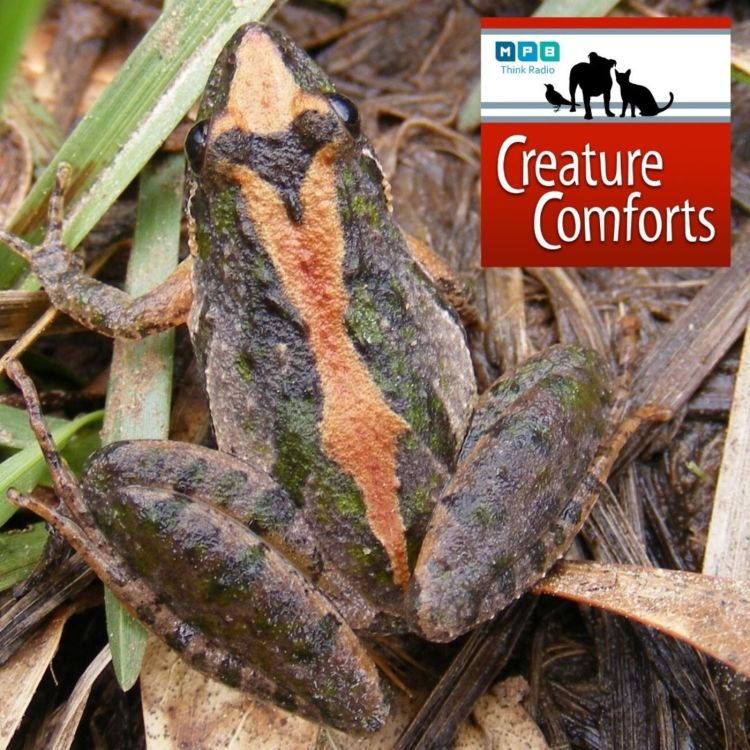 cover art for Creature Comforts: Croaks and Ribbits