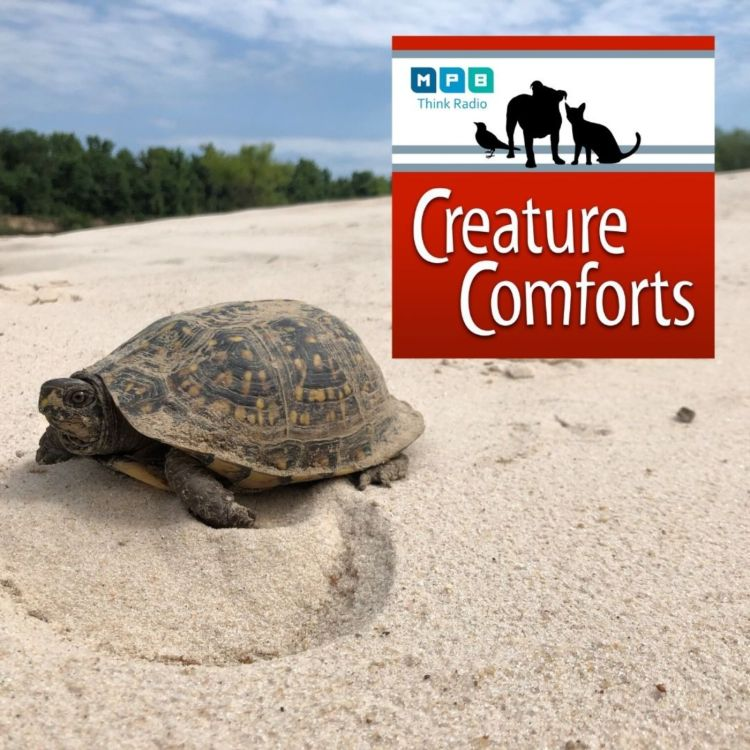 cover art for Creature Comforts: Slow and Steady w/ Dr. Will Selman