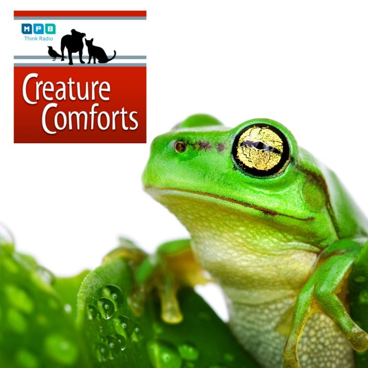 cover art for Creature Comforts: Late Summer in Mid-July