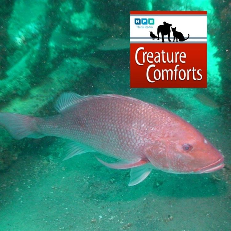 cover art for Creature Comforts | Reef Fish