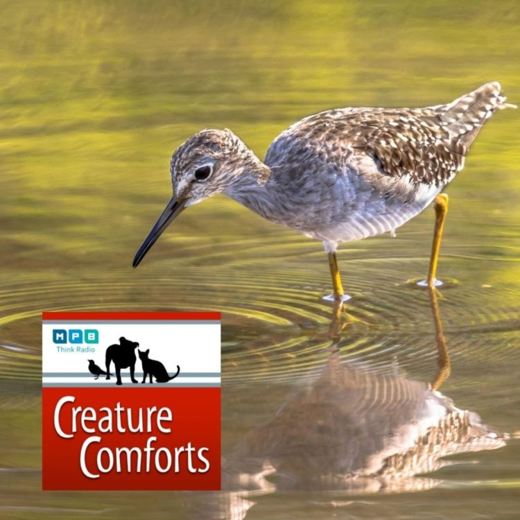 cover art for Creature Comforts | Delta Wind Birds