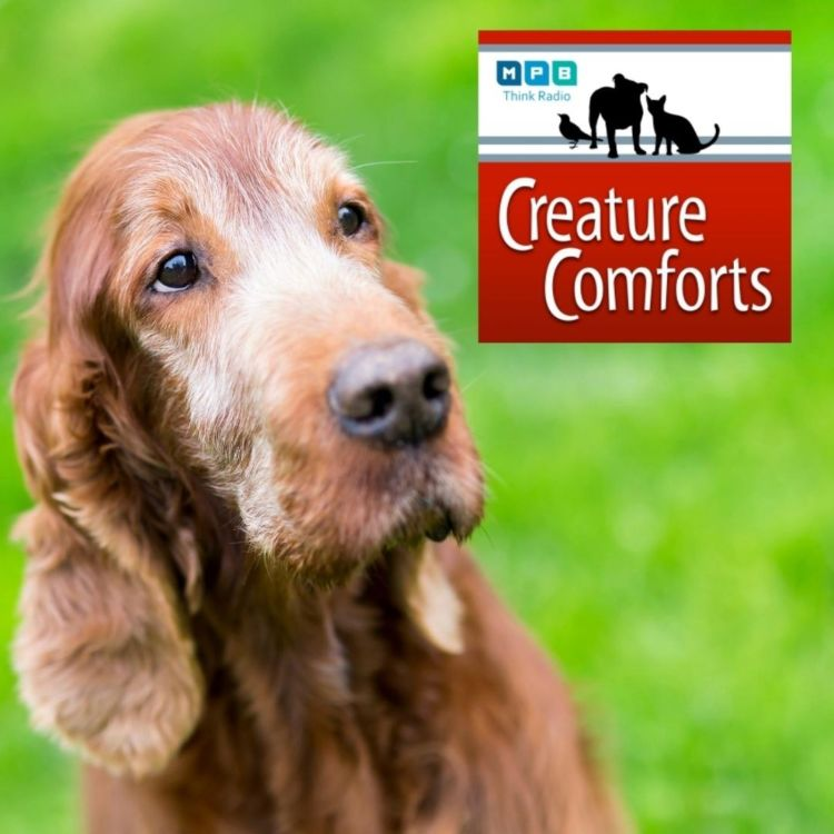 cover art for Creature Comforts | Pet Day - Older Pets