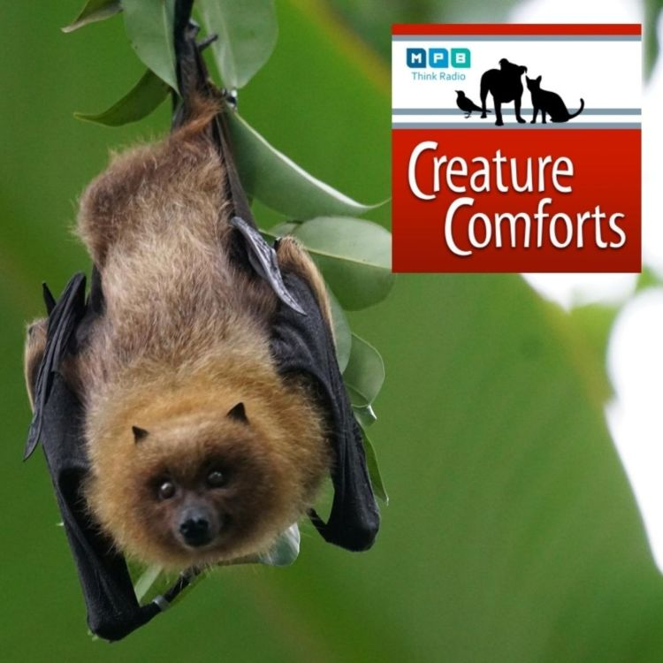 cover art for Creature Comforts | Mississippi Bats
