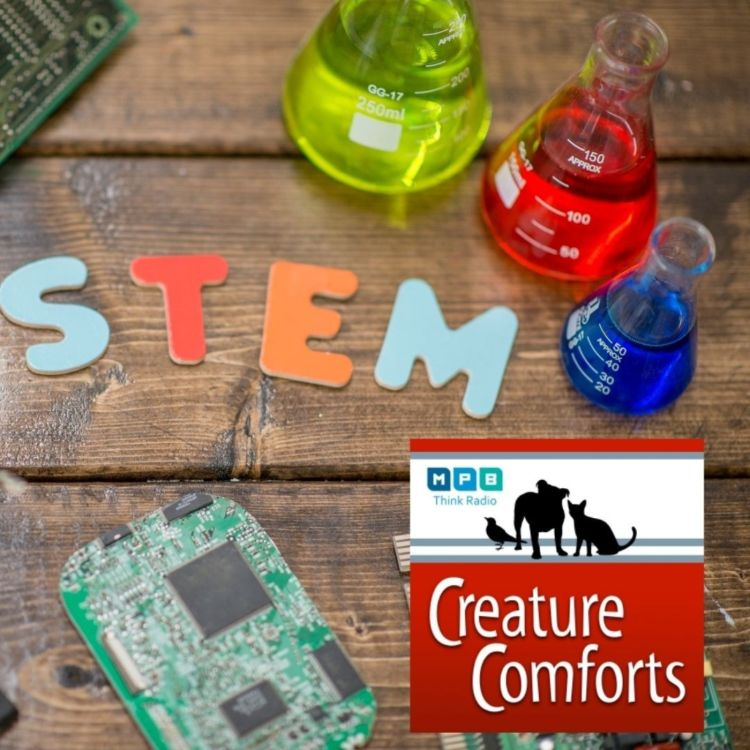 cover art for Creature Comforts | Science Fest 2020