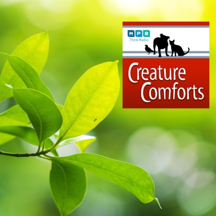 cover art for Creature Comforts | Wildlife Mississippi