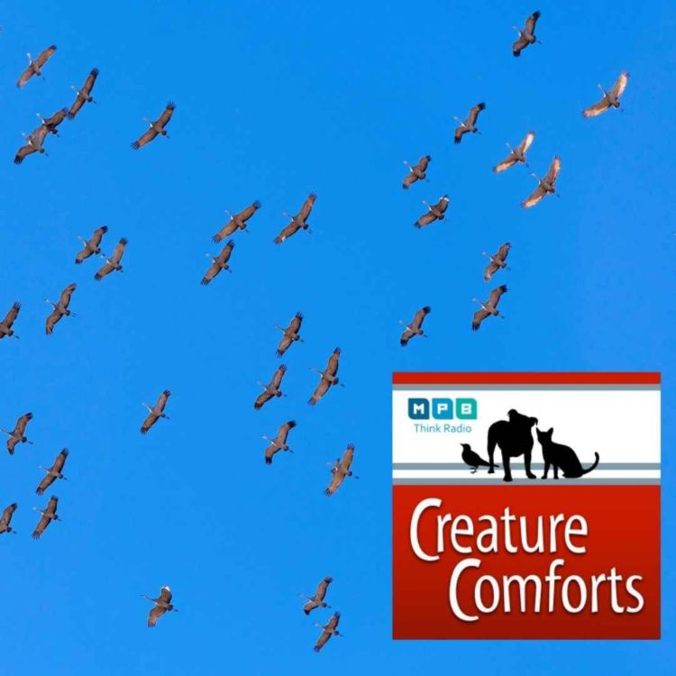 cover art for Creature Comforts | Mississippi Migration