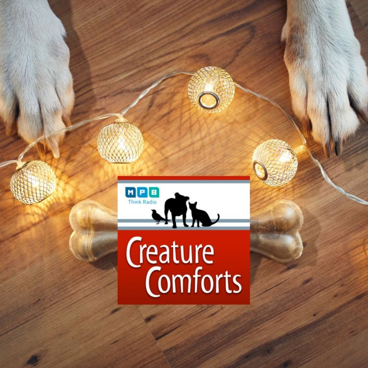 cover art for Creature Comforts | December Pet Day
