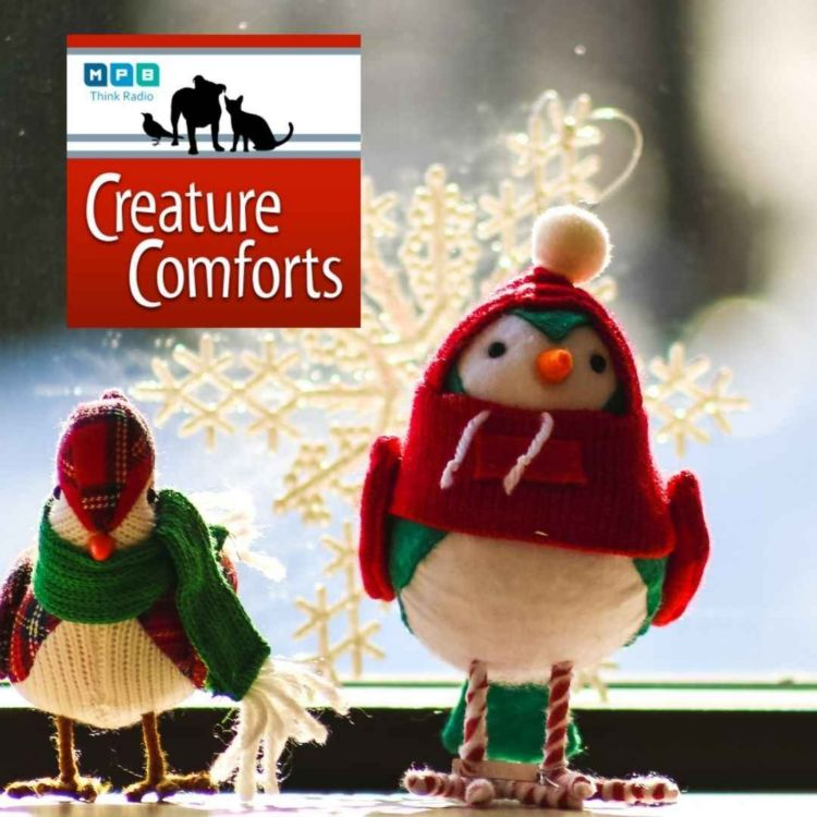 cover art for Creature Comforts | Mississippi Winter Birds