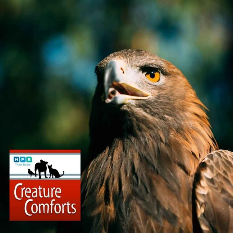 cover art for Creature Comforts | Eagle Time