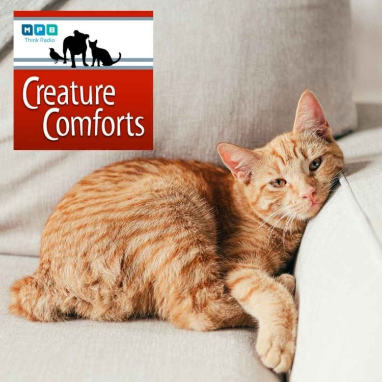 cover art for Creature Comforts | Pet Day - February 2021