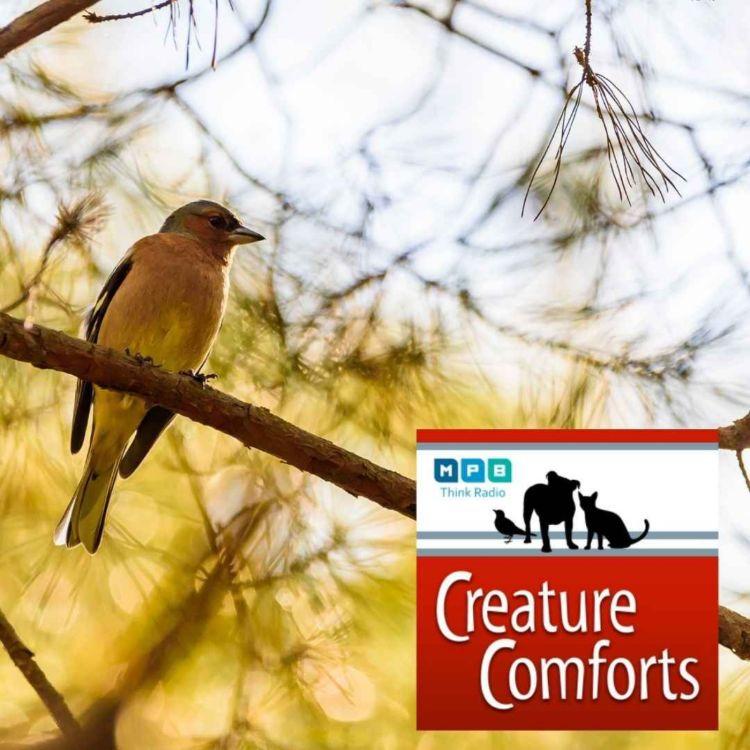 cover art for Creature Comforts | Bird Behavior w/ Joe McGee
