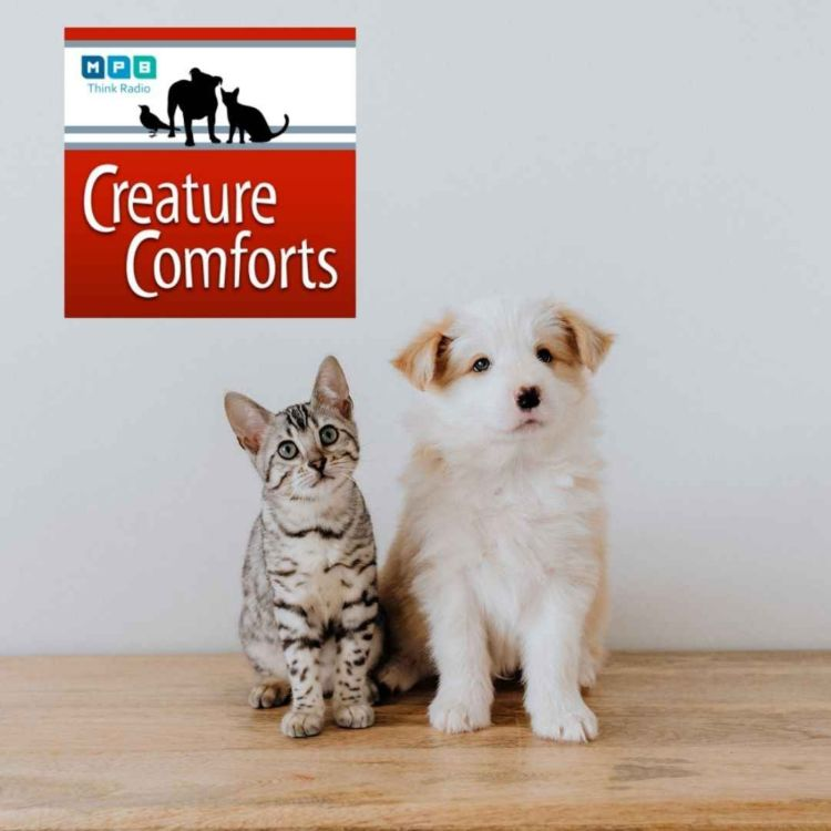 cover art for Creature Comforts | Pet Day - March 2021