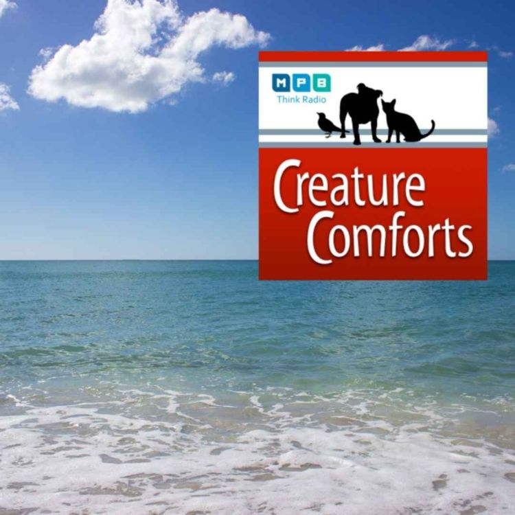 cover art for Creature Comforts | Rice's Whale