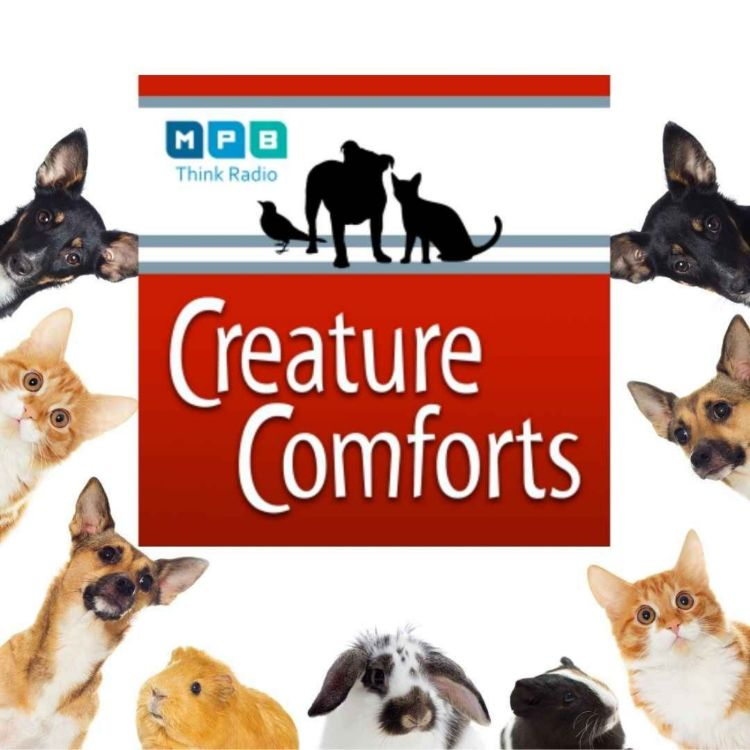 cover art for Creature Comforts | Pet Day - April 2021
