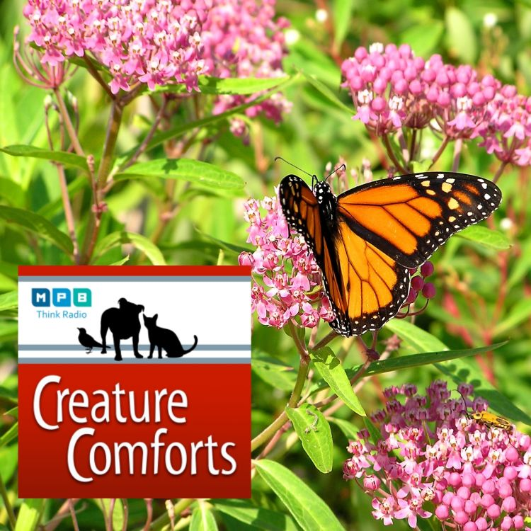 cover art for Creature Comforts | National Wildlife Week