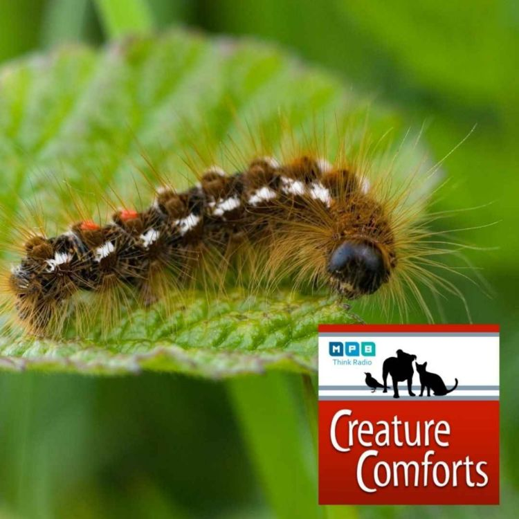 cover art for Creature Comforts   Caterpillar Time
