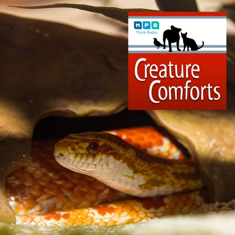 cover art for Creature Comforts | Snakes Galore
