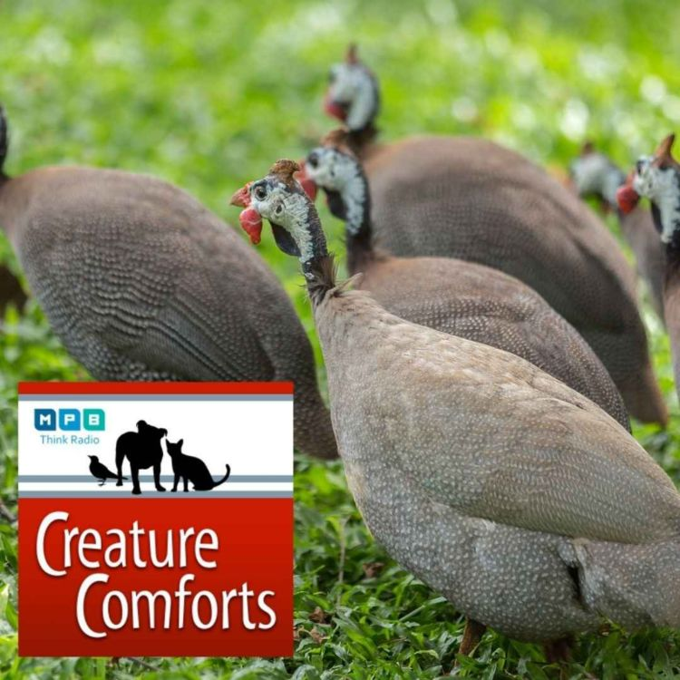 cover art for Creature Comforts   Pet Day - May 2021