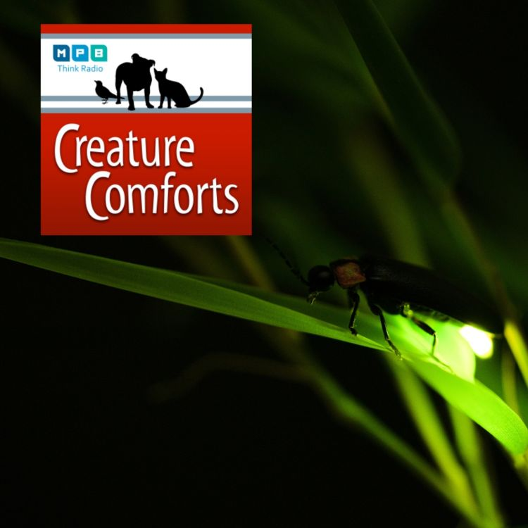 cover art for Creature Comforts | Light Up The Night