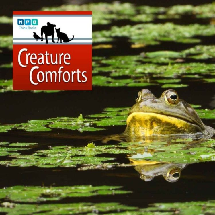 cover art for Creature Comforts | Frog Talk
